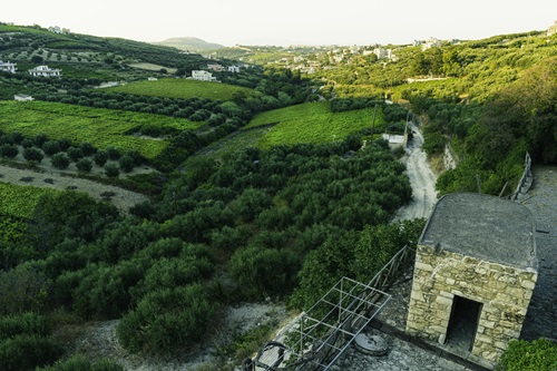 Crete vineyards