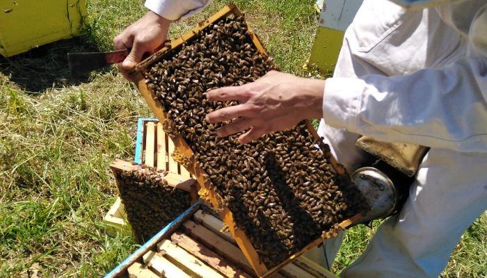 Honey Making in Naxos Greece