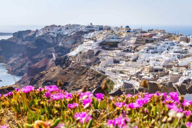 Spring flowers in Santorini