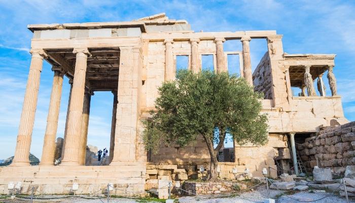 Moria olive tree, Acropolis
